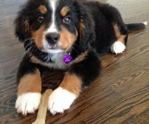 adorable, puppy, and sweet image