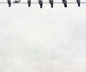 birds image