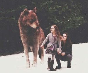 twilight, bella, and jacob image