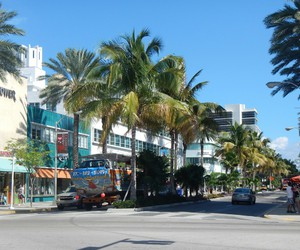 mall, Miami, and palms image