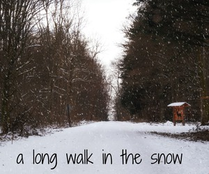 forest, walk, and snow image