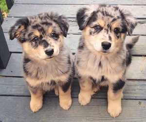 dogs, cute, and two image