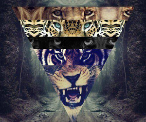 background, hipster, and tiger image