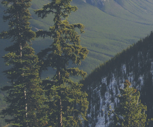 nature, forest, and mountains image