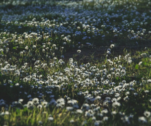 flowers, nature, and love image