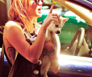 dog, miley cyrus, and cute image