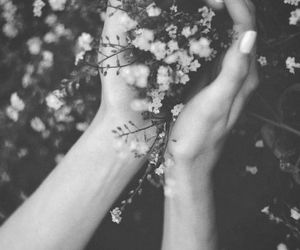 flowers, forest, and photography image