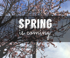 spring, flowers, and coming image