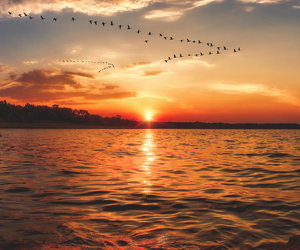bird, sunset, and sun image