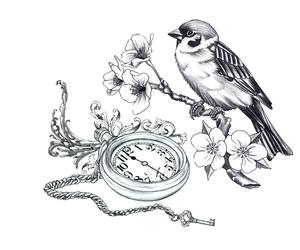 key and pajaro image