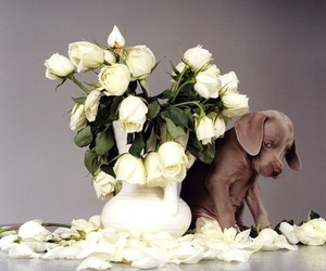 dogs flowers image