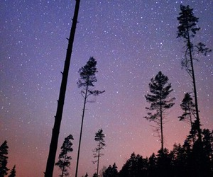 color, cosmos, and forest image