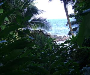 sea, beach, and palms image