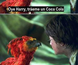 harry potter, funny, and la orden del fenix image
