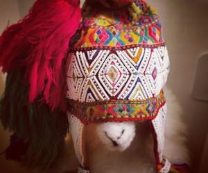 lhama, llama, and gorro image