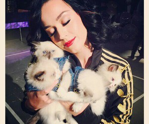 katy perry, cat, and katy image