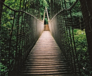 bridge, green, and nature image
