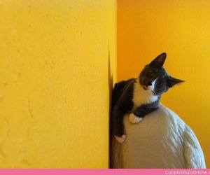 cats, cute animals, and cute cats image