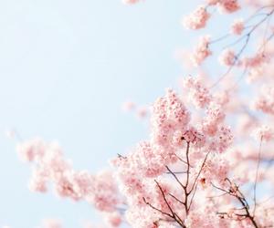 spring and may image
