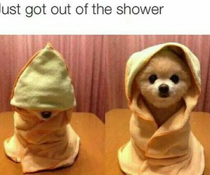 funny, puppy, and shower image