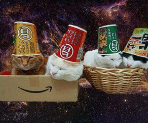 cats, galaxy, and lol image