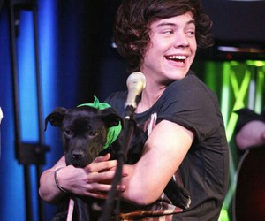 one direction, dog, and Harry Styles image