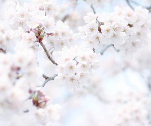 blossom, flores, and flowers image