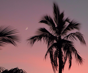 sunset, moon, and palm trees image
