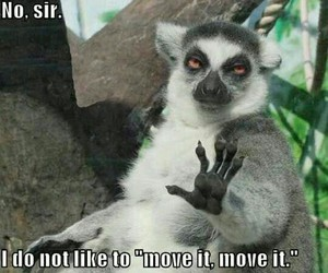 funny, madagascar, and lol image