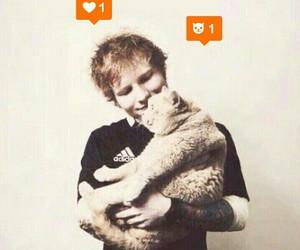cat and ed sheeran image