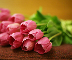 beauty, flowers, and fresh image