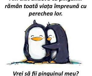 pinguin, penguin love, and love image