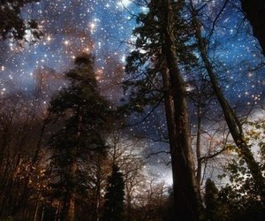 forest, night, and nacht image