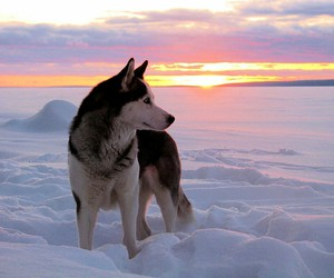 snow, sunset, and animal image
