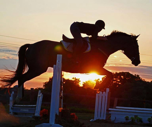 horse, passion, and love image