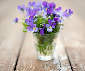 flowers, nature, and violet image