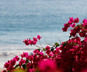 beautiful, holiday, and flowers image