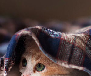 adorable, kittens, and cats image