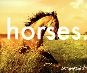 grateful, horses, and text image