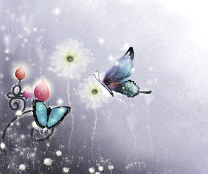 butterflies, butterfly, and wallpaper image