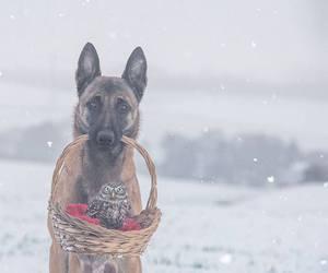 dog, owl, and animal image