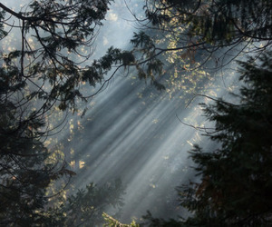 beautiful, explore, and forest image