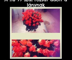 rózsa image