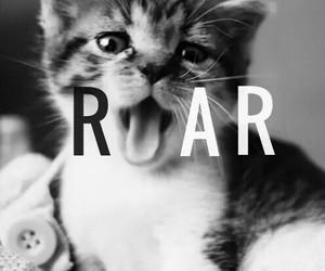 roar, cat, and cute image