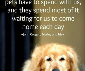 dog, quote, and life image