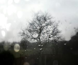 pluie, rain, and tree image