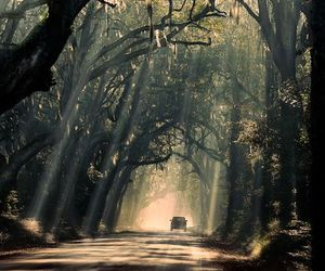 car, forest, and tree image