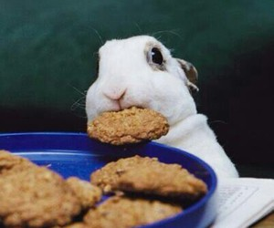 animals, bunny, and food image
