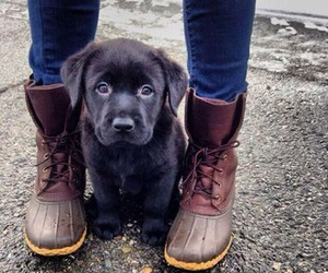 Animais, boots, and gorgeous image