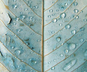 leaves, blue, and water image